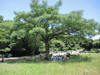 センダンの木の下.JPG