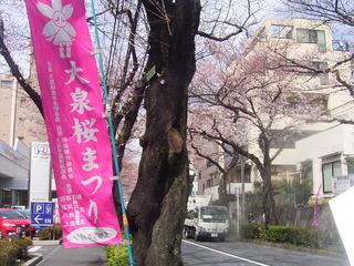学園通りの桜並木.JPG