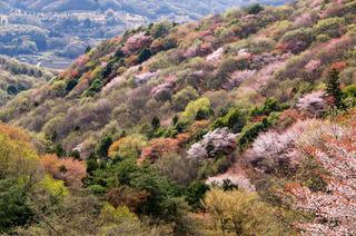 sakuragawa014.jpg